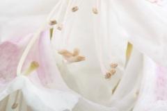Blommor-i-vår-trdg-maj-2015-5