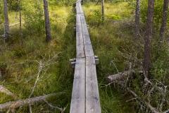 Spängerna känns som motorväg i skogen