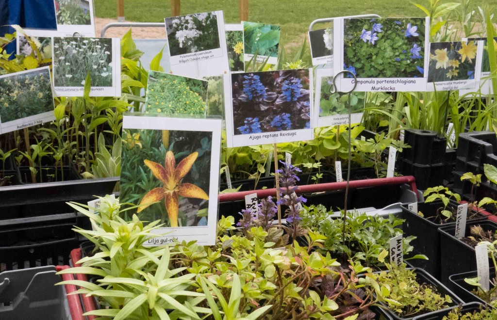 Växtmarknad Enhagen 2