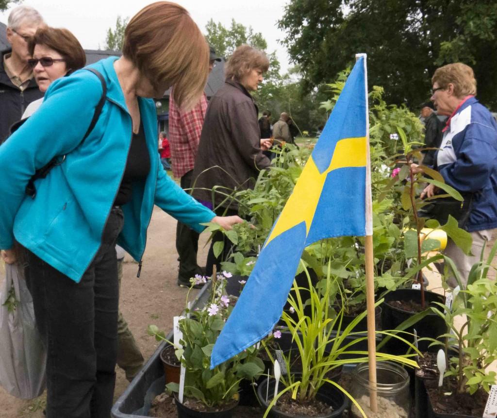 Växtmarknad Enhagen 3