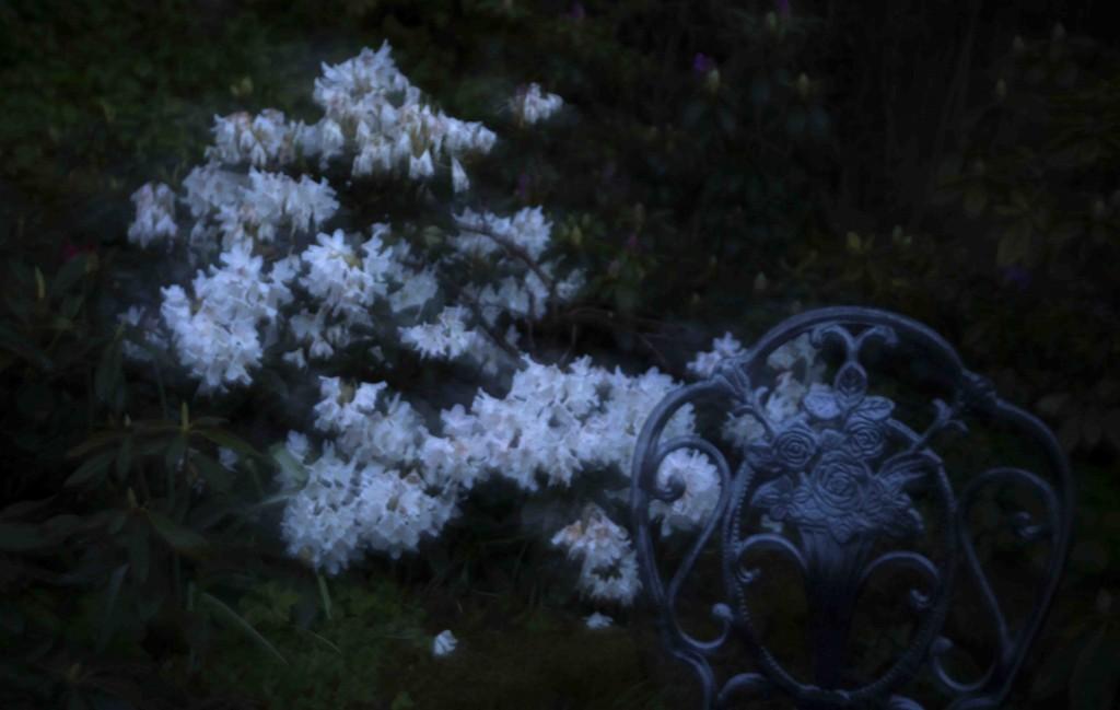 Nattfoto i trdg 1