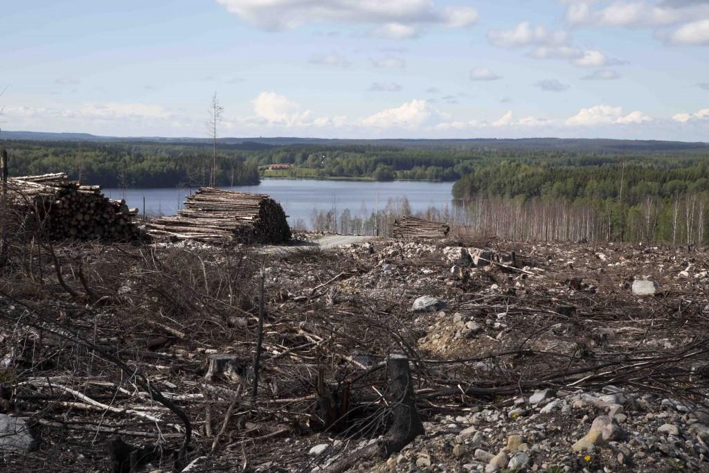Skogsbrandsområdet 3