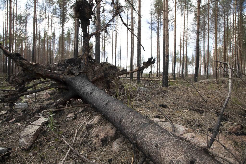 Skogsbrandsområdet 4