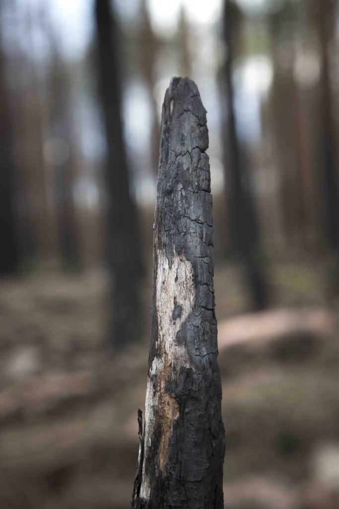 Skogsbrandsområdet 6