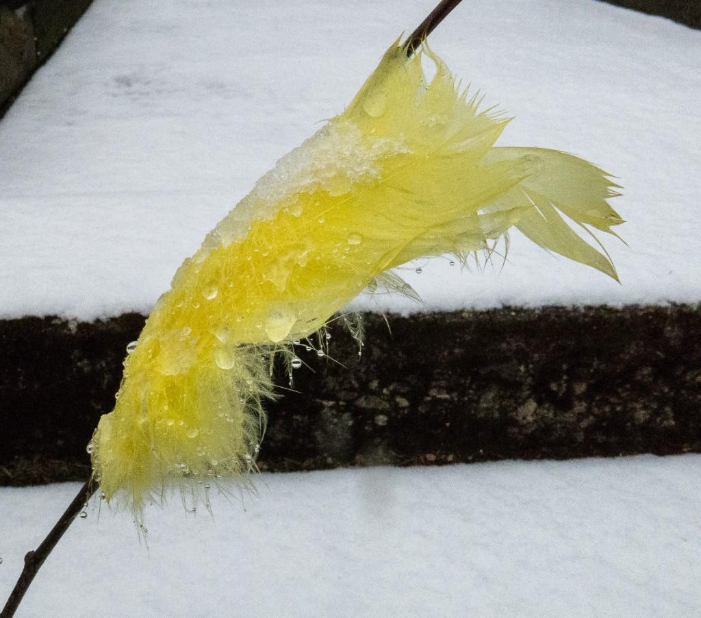 Snö i påskfjädrarna