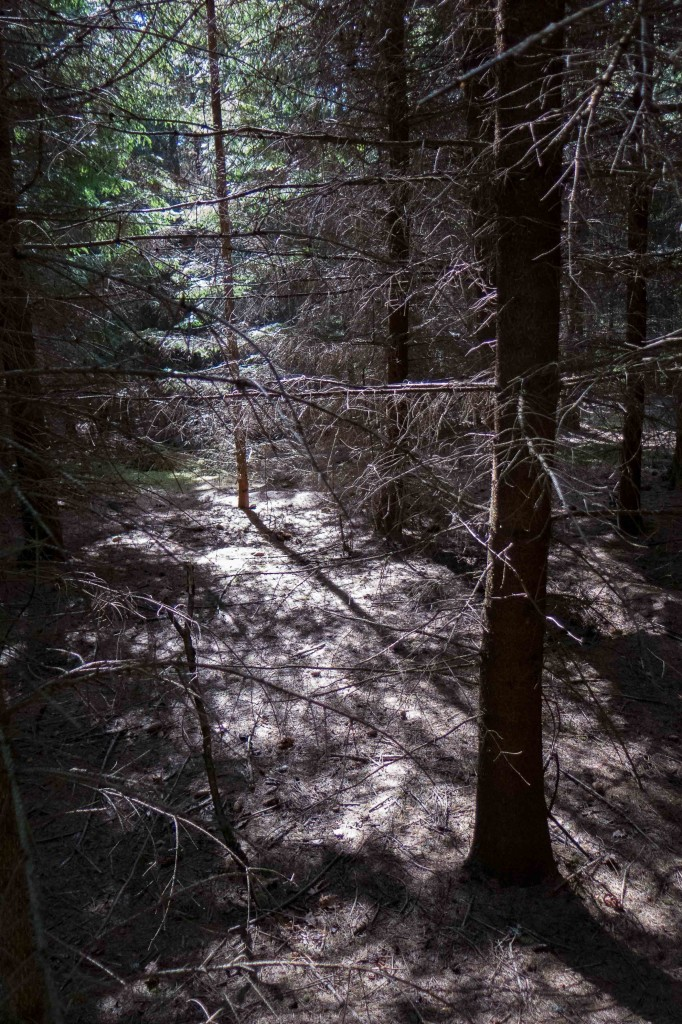 Promenad 24 maj Herrevad-4