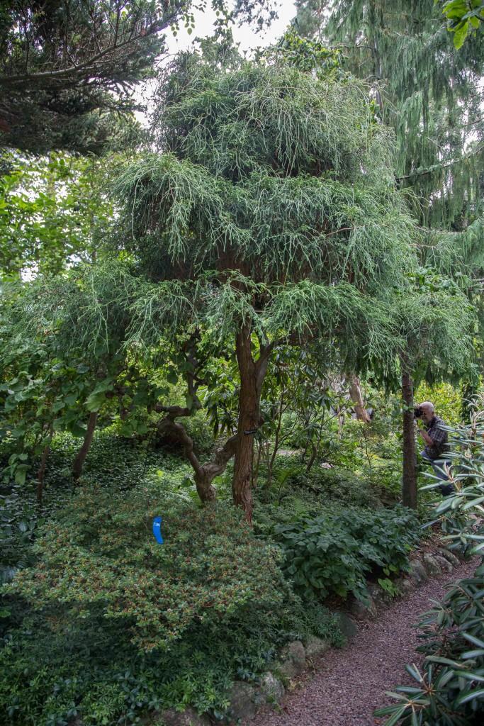 Öppen trädgård lands-1-5