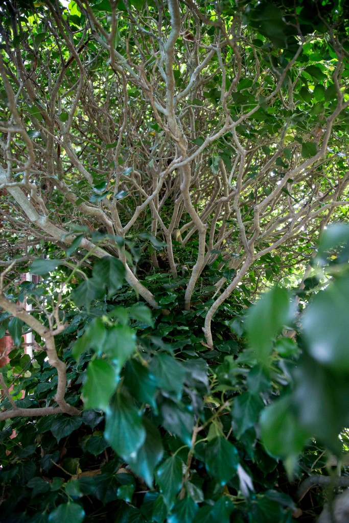 Öppen trädgård lands-1