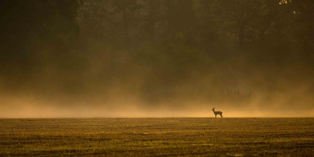 Strömsholmsområdet morgonbilder 21 aug 2017-1-8