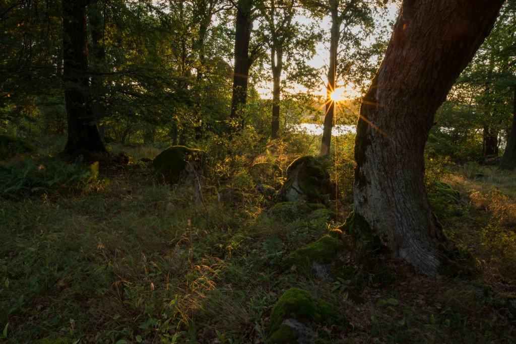 Ekholmen 6 sept 2017-1-4