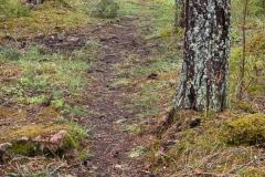 Djurgården-S-holm-April-3-Markerad-stig
