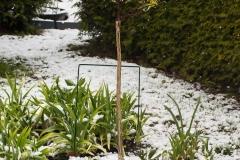 Snö-i-april-Benved-och-Julros
