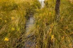 Stora Björknarsjön, ett av alla källflöden till Kolbäcksån