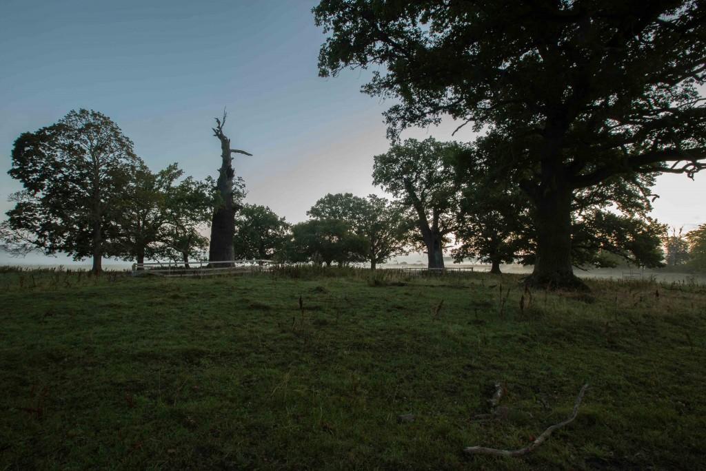 Strömsholmsområdet morgonbilder 21 aug 2017-1-3