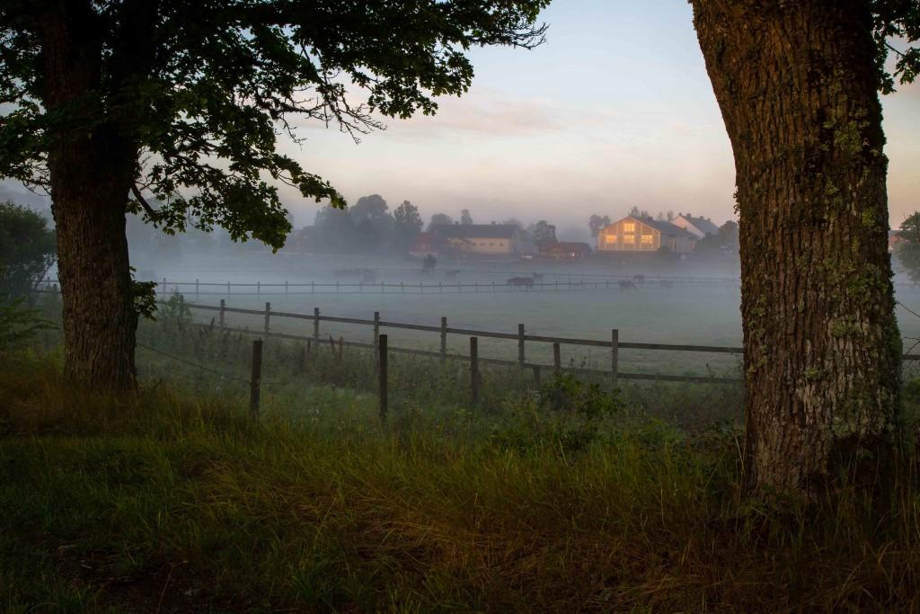Strömsholmsområdet morgonbilder 21 aug 2017-1-6